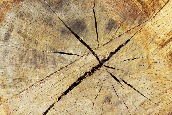 Stock photo: Tree ring wood details