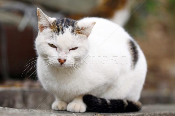 Kot shot oka twarz włosy Zdjęcia stock © kawing921