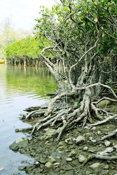 Costa água grama floresta natureza beleza Foto stock © kawing921