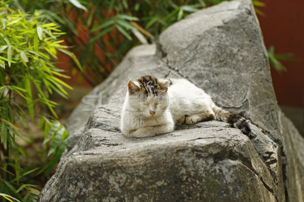 Adormecido gato rochas olhos fundo rocha Foto stock © kawing921