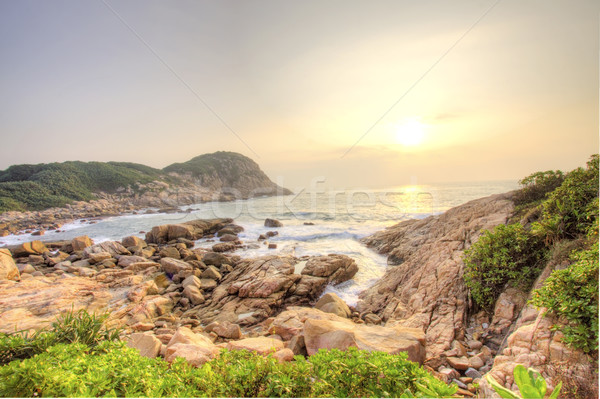 Stockfoto: Zee · stenen · kust · zonsopgang · water · boom