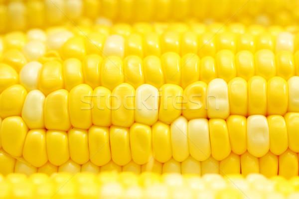 Kukorica közelkép természet levél gyümölcs egészség Stock fotó © kawing921