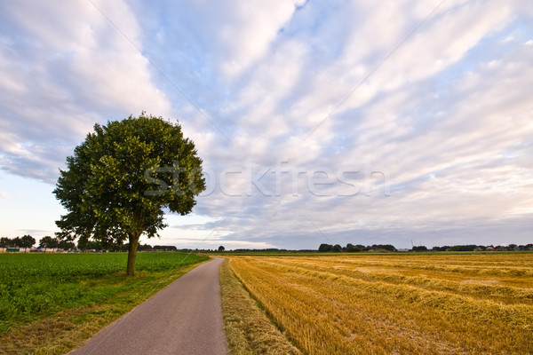дерево облачный небе облака природы Сток-фото © kaycee