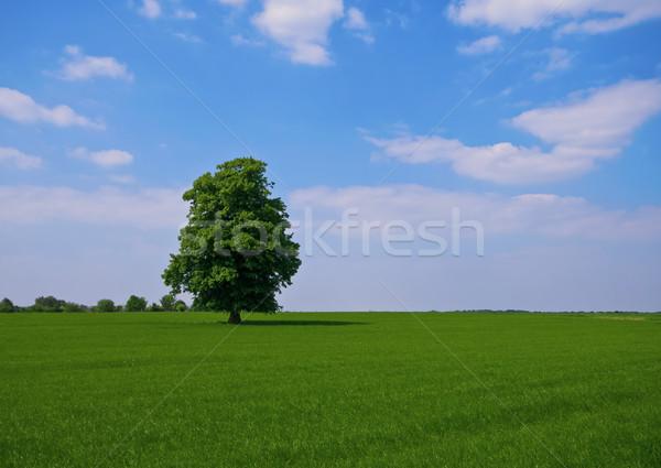 Сток-фото: зеленый · дерево · пастбище · Постоянный · природы