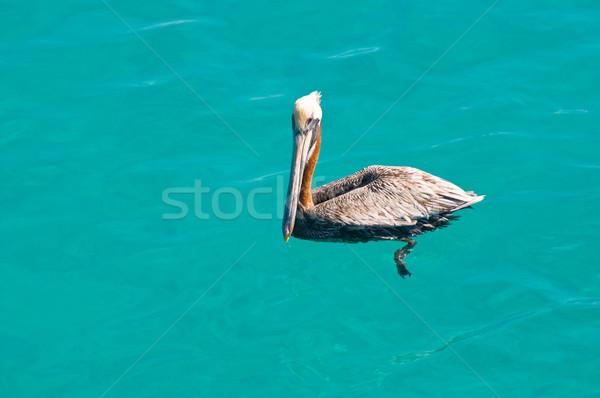 воды океана птица плавать Карибы Сток-фото © kaycee