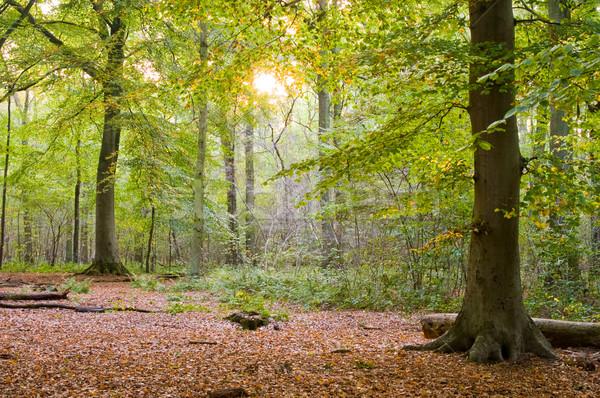 Сток-фото: осень · закат · лес · кусок · цветами · древесины