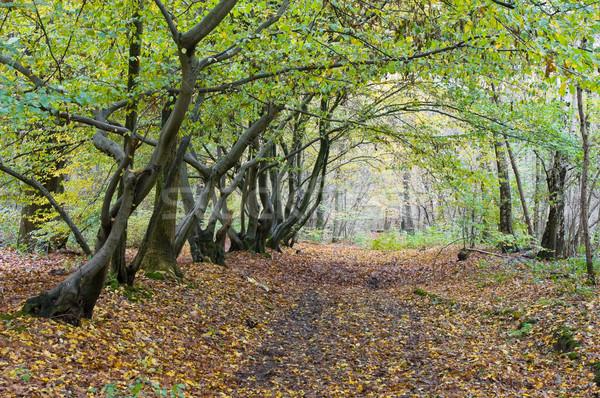осень полоса лес свет место назад Сток-фото © kaycee