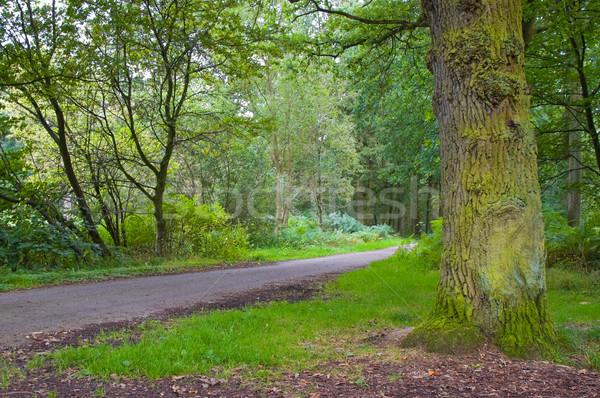 лес свежие зеленый путь работает Сток-фото © kaycee