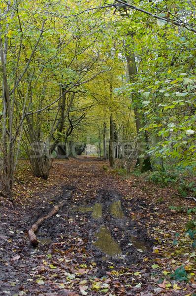 осень лужа сцена пейзаж грязи Сток-фото © kaycee