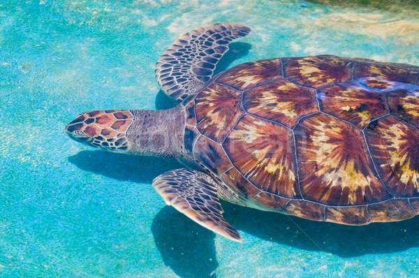 плаванию морем черепахи бирюзовый воды подводного Сток-фото © kaycee