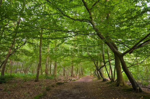 зеленый лес ярко Солнечный коричневый полу Сток-фото © kaycee
