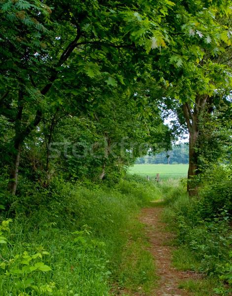 лес путь мнение стране дороги зеленый Сток-фото © kaycee