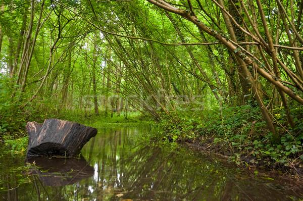 лет лес ручей работает Размышления воды Сток-фото © kaycee