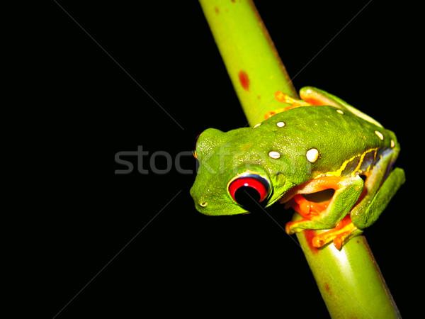 красный глаза сидят веточка лес Сток-фото © kaycee