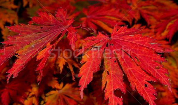 красный Nice яркий подробность Сток-фото © kaycee