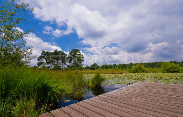 Лилия пруд пирс покрытый облачный Сток-фото © kaycee