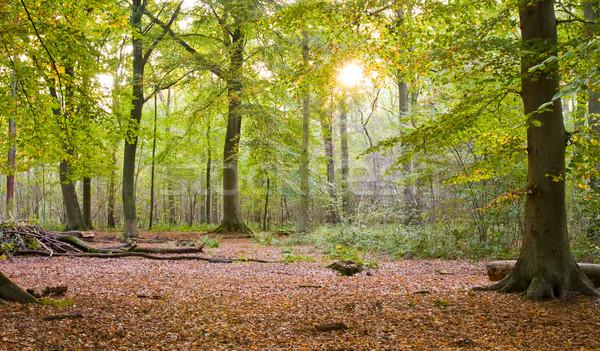осень лес Осенний сезон солнце пейзаж лист Сток-фото © kaycee