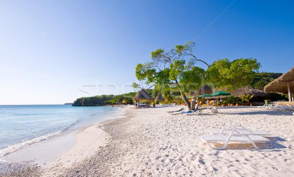 тропический пляж Nice яркий зеленый деревья воды Сток-фото © kaycee