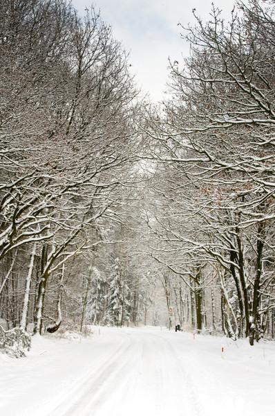Foresta coperto neve pallido cielo panorama Foto d'archivio © kaycee