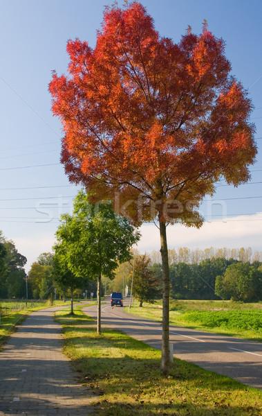 Сток-фото: красный · осень · дерево · один · дороги · сторона