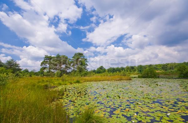 Сток-фото: Лилия · пруд · пирс · покрытый · облачный
