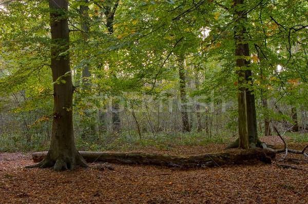 осень лес кусок цветами древесины природы Сток-фото © kaycee