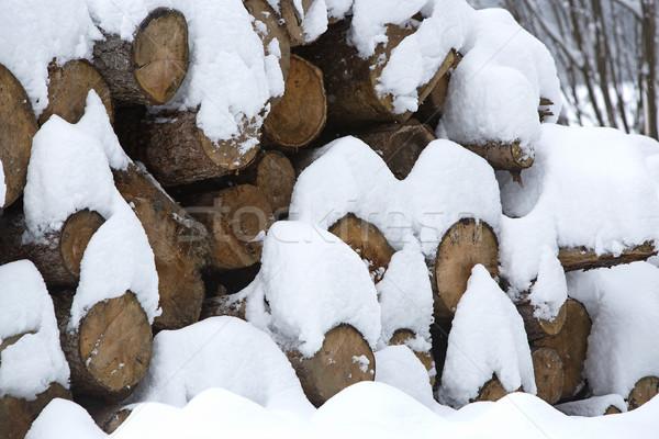 Stok fotoğraf: Kar · kapalı · ahşap · dışında · orman