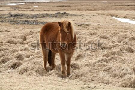 Barna ló legelő tavasz fű tájkép Stock fotó © kb-photodesign