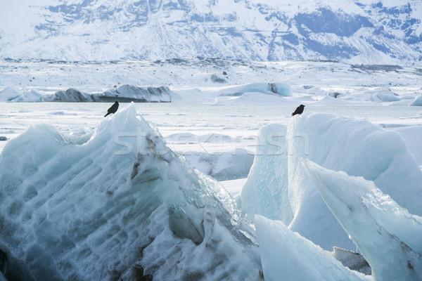 Raaf zitten ijs vogels Europa toerisme Stockfoto © kb-photodesign
