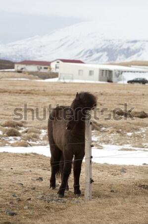 Fiatal csikó portré ló tavasz tél Stock fotó © kb-photodesign