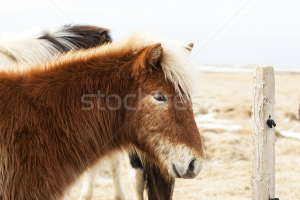Portrait poney printemps herbe paysage Photo stock © kb-photodesign