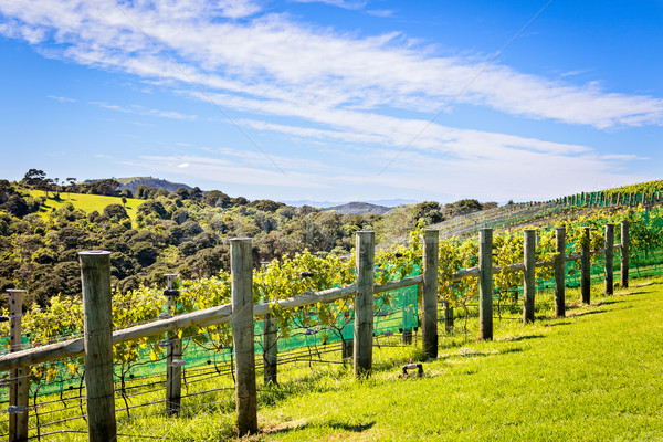 Wijn wijngaard druif wijnstokken Blauw Stockfoto © keeweeboy