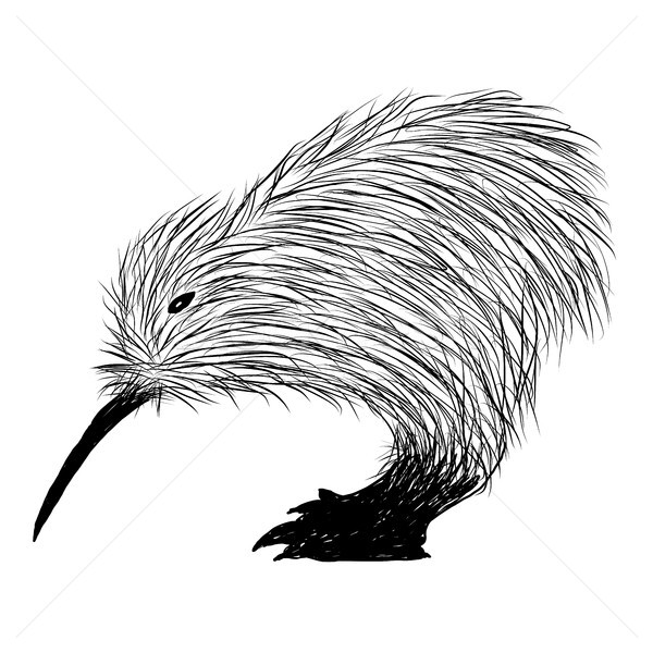 Kiwi Bird Vector Stock photo © keeweeboy