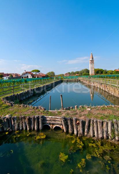 Venice Burano Mazorbo vineyard Stock photo © keko64