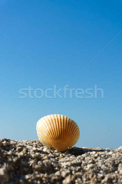 Seashell on rock Stock photo © kenishirotie