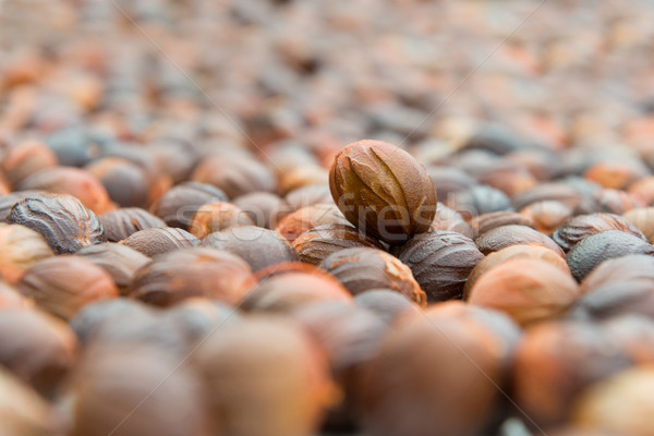 Küçük hindistan cevizi atış kurutulmuş doğa meyve Stok fotoğraf © kenishirotie