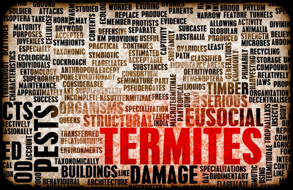 Termites Stock photo © kentoh