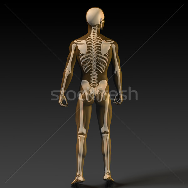 Emberi csont struktúra diagram narancs fekete Stock fotó © kentoh