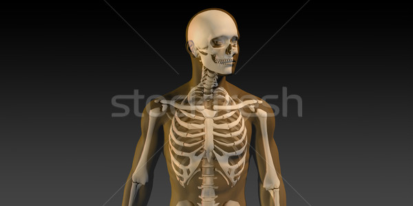 Stock photo: Human Anatomy with Visible Skeleton and Muscles