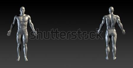 человека тело презентация медицинской анатомии искусства Сток-фото © kentoh