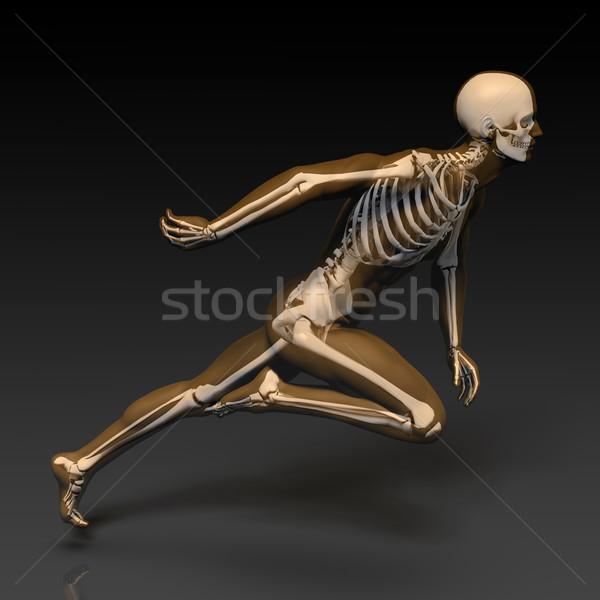 人間 ボディ スケルトン 解剖 X線 モデル ストックフォト © kentoh