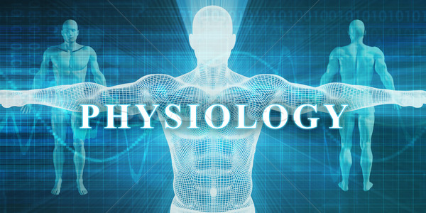 Physiology Stock photo © kentoh