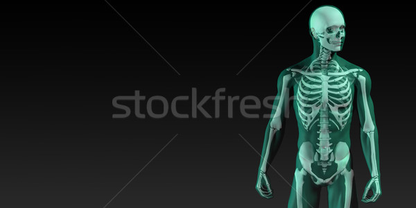 Human Bone Structure Diagram Stock photo © kentoh