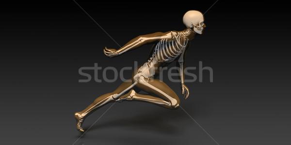 Esquadrinhar ossos corpo saúde educação Foto stock © kentoh