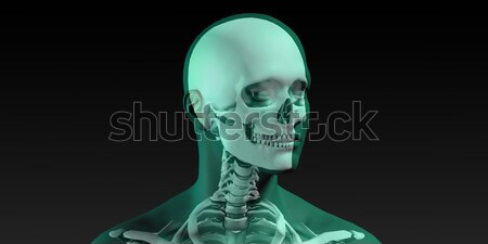Medical Illustration of Human Body and Bones Stock photo © kentoh