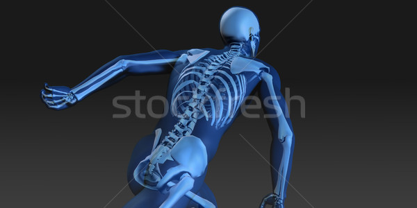 Human Body and Skeleton Anatomy Stock photo © kentoh