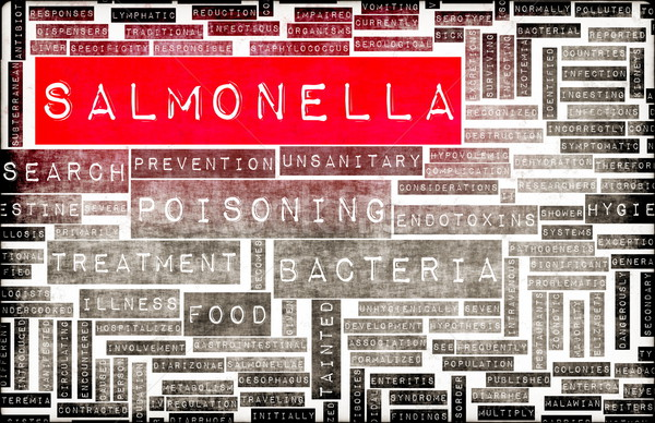 Salmonella Stock photo © kentoh
