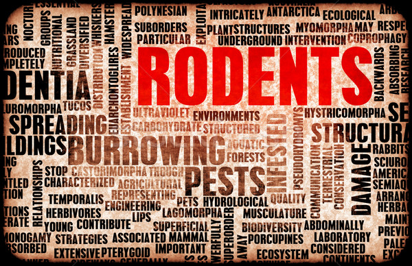 Rodents Stock photo © kentoh