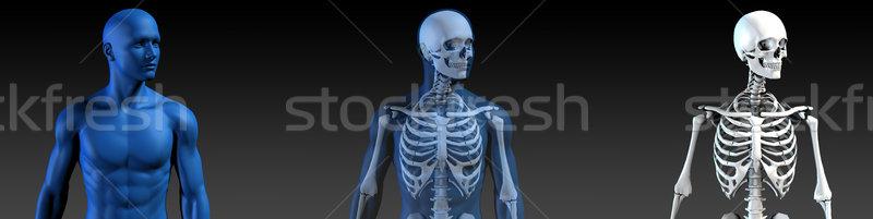 átlátszó emberi csont struktúra mozgás egészség Stock fotó © kentoh