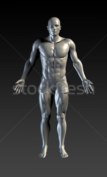 Emberi test bemutató orvosi anatómia művészet Stock fotó © kentoh